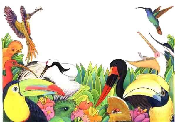 Aves - Picos