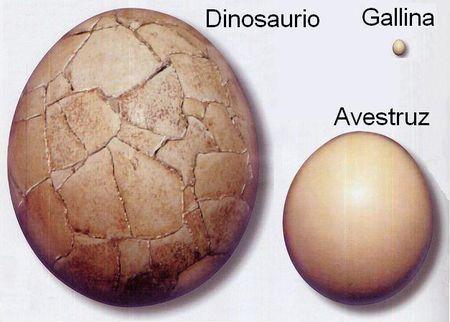Huevos de dinosaurios