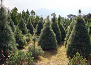 Bosque de las Navidades Pasadas
