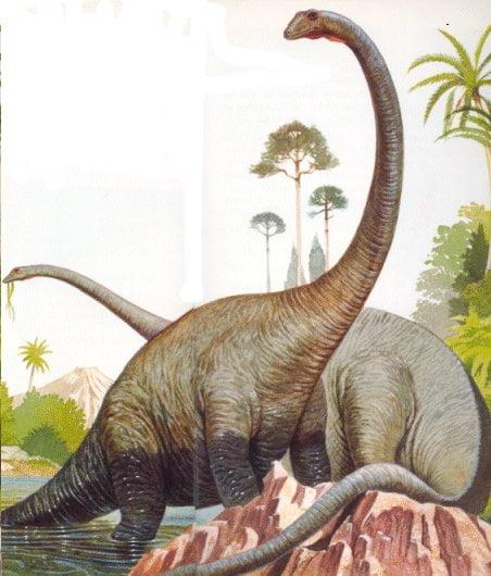 Ataque y defensa de los dinosaurios - Dinosaure diplodocus ...
