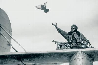 Palomas en la guerra