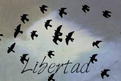 Significado de la palabra libertad