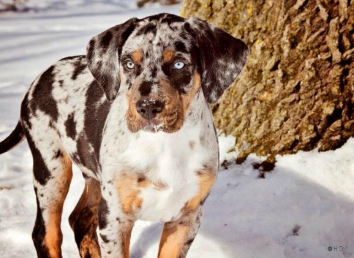 Las razas de perros mas extranas del mundo